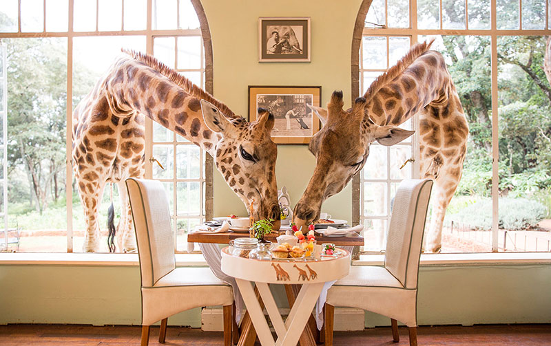kenya giraffe hotel