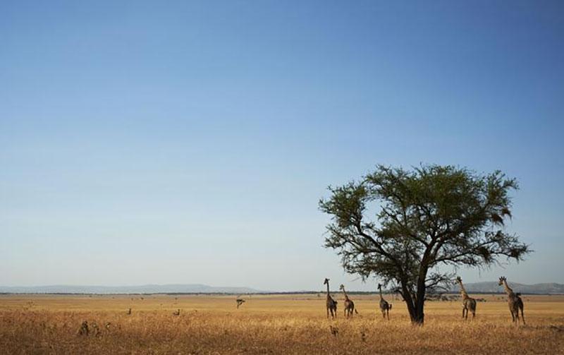 zanzibar plains