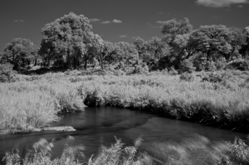 1pm - Infrared Landscape. Middat was a great time to wander around camp with my infrared filter and play around with long exposure photos. This was shot from the deck at Lions Sands Tinga Lodge.
