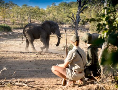 WILDLIFE TRACKING EXPERIENCES IN SOUTH AFRICA